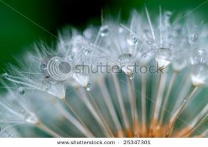 Semoga aku bisa seperti Bunga Dandelion :D