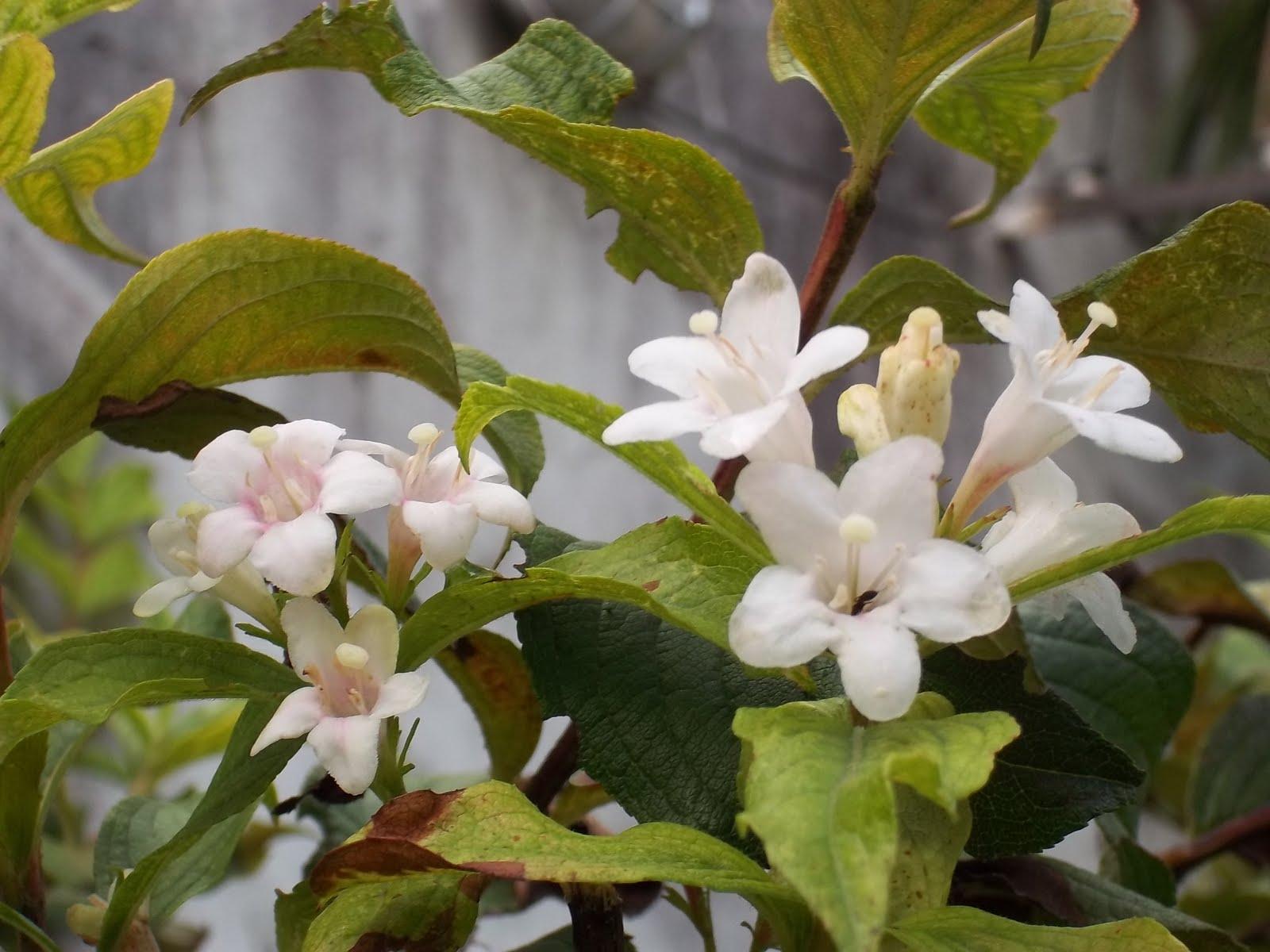 El cuidado de las plantas y el jardin 29 01 12 5 02 12 - Alegria planta cuidados ...