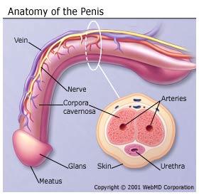 Tip Of Penis Blue 99