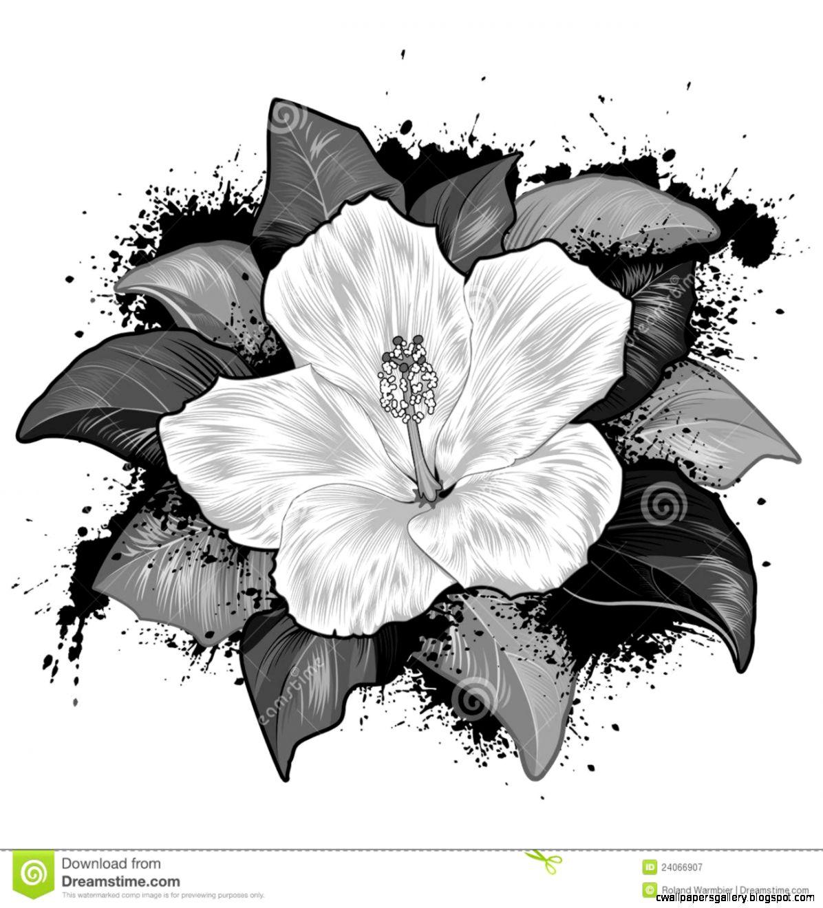 Hawaiian Hibiscus Flower Drawings   Flowers Ideas