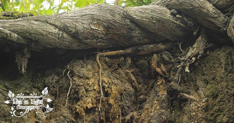 tanah dan akar