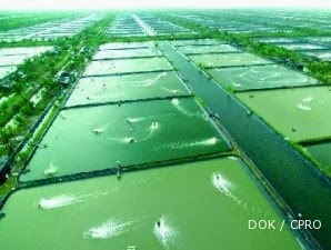Tambak Udang, Lahan Bisnis Negara Maritim