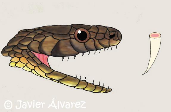 Las serpientes y su veneno | Anfibios y Reptiles de La Rioja