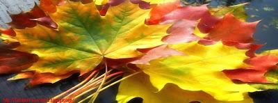 Couverture facebook feuilles d'automne 3
