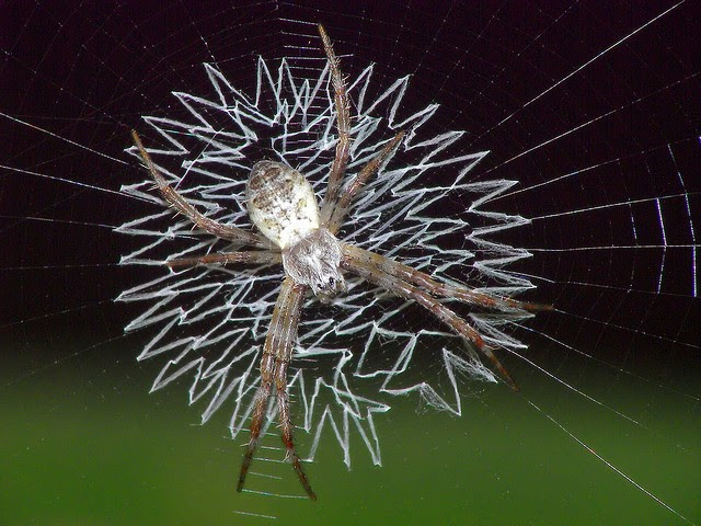 the spiders that decorate their own webs the ark in space. Black Bedroom Furniture Sets. Home Design Ideas