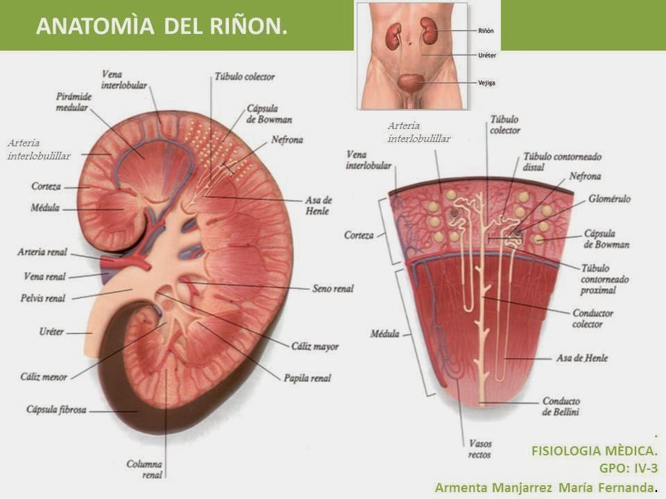 Patología B 2013 - Carrizo María Paine: PATOLOGÍA RENAL - Generalidades