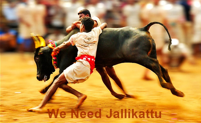 We Need Jallikattu