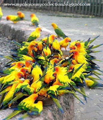 Beautiful Yellow Green Parrots