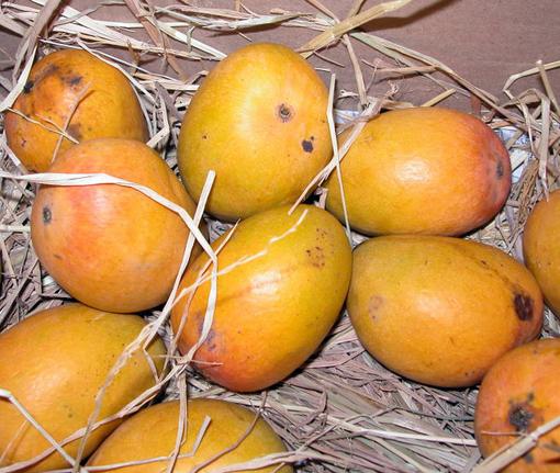 आम फल के गुण व् फायदे