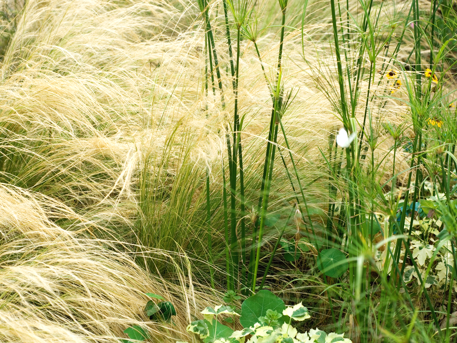 Wild grasses wallpaper all institutions are prone to for Like long grasses