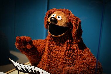 Perro rufo muppets