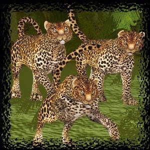 http://3.bp.blogspot.com/-XG11y_Qnny0/VE6TMYFDXdI/AAAAAAAAC7o/I3RhrG2mT9E/s1600/Mgtcs__Tigers.jpg