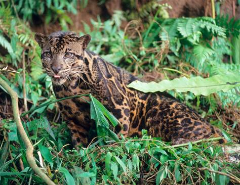 Dwen The Cool Things I Love New Cat Species Found In