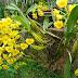 Kỹ thuật chăm sóc hoa phong lan hiệu quả
