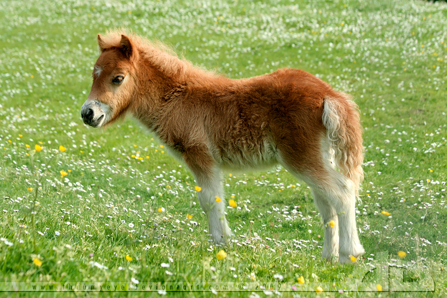 cute baby foals - photo #34