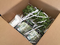 plants in box with shredded paper