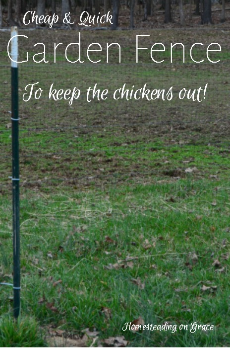 Inexpensive Garden Fence Homesteading on Grace