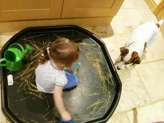 Dog and spaghetti