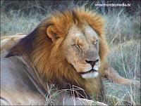 Lion park Johannesburg