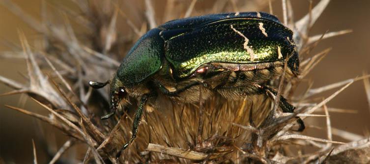 Boletín Sociedad Andaluza de Entomología Vol. 5