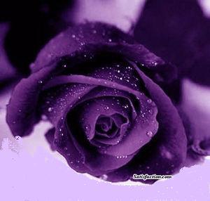 Sisi Lain Arti Dari Enam Warna Bunga Mawar