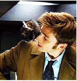 The Doctor + a Kitten Award for Internetting a Lot