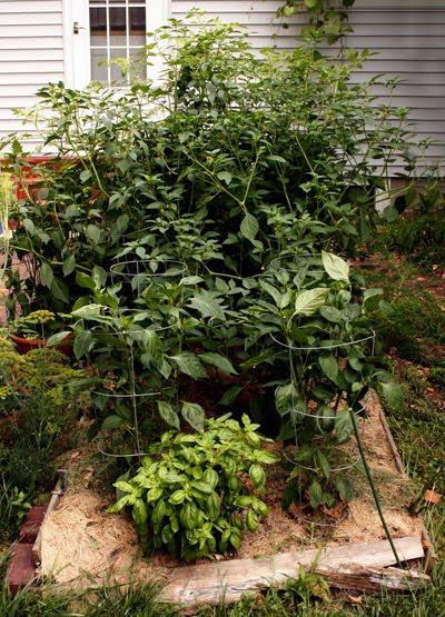 other garden bed