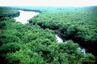 Green view of Sundarban