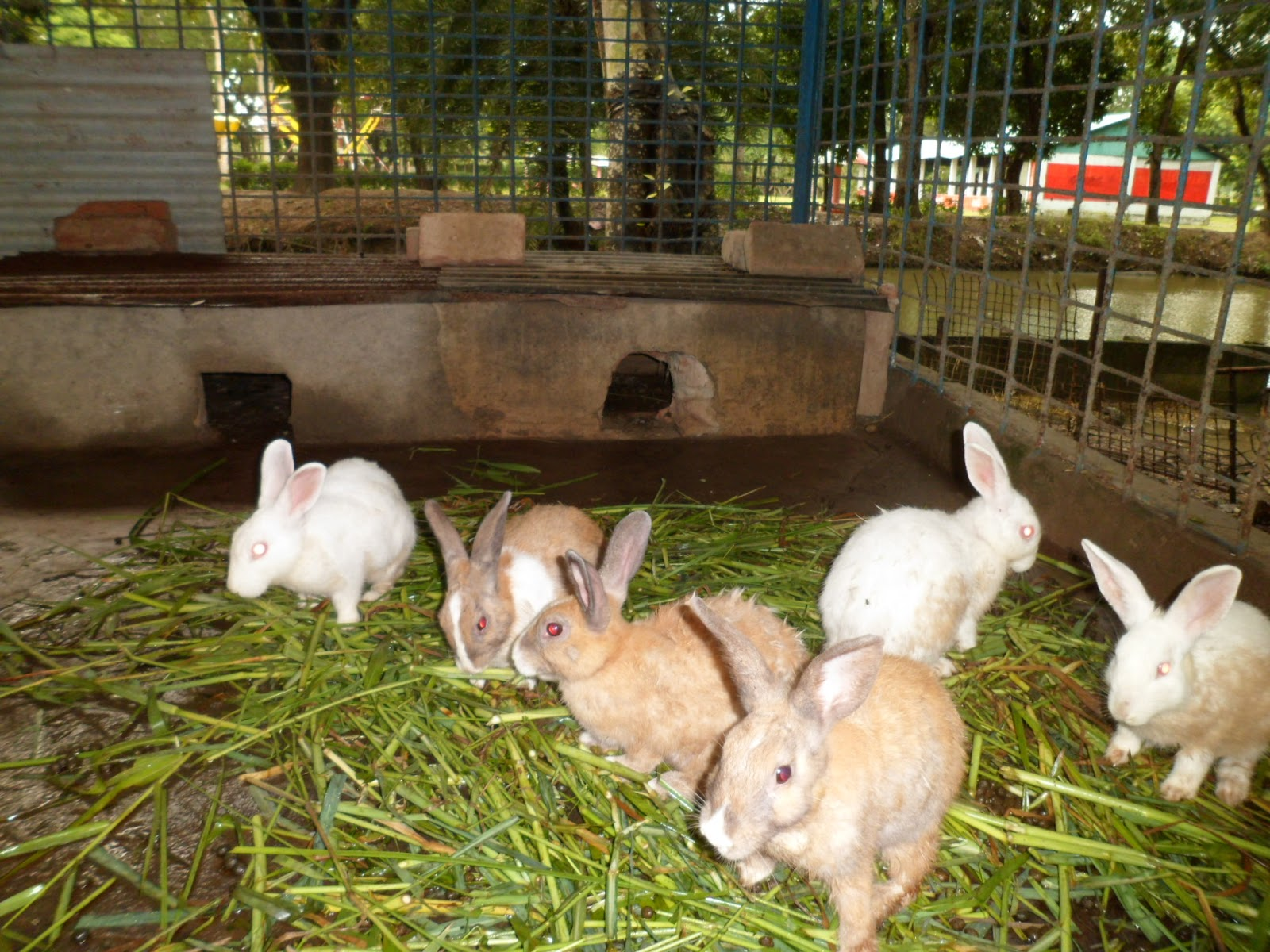 rabbit, rabbit farming, rabbit photo, picture of rabbit