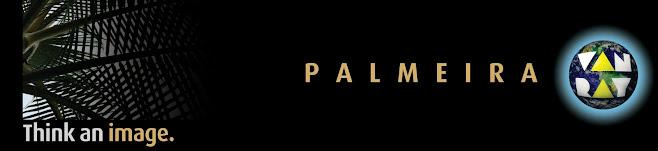 palmeira van ray