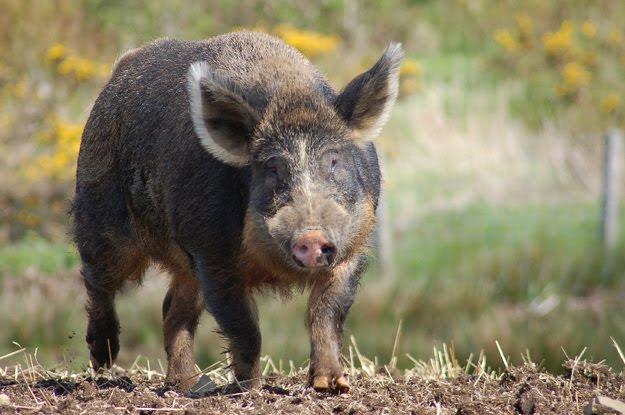 Hybrid animals скачать бесплатно - f
