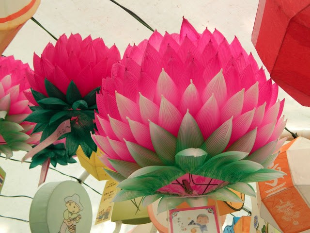 Pink and white combination of lotus
