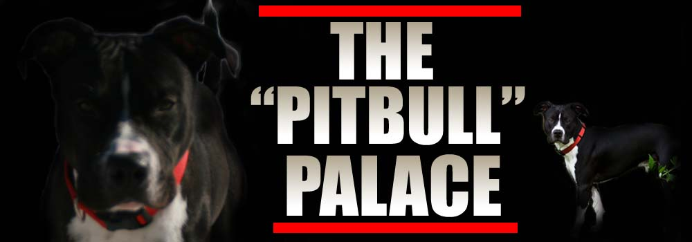 The Pitbull Palace