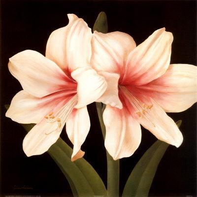 Buying and Caring for an Easter Lily - American Profile