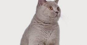 Cara Mengobati Dan Mengatasi Kucing Mencret Atau Diare