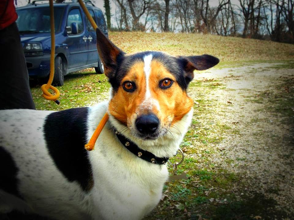 Re,un cane che ha perso le elezioni 2015!
