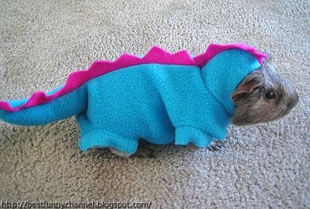 Guinea pig dragon.