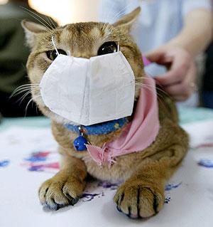 Dr mi gato tiene sida amores de perros for El sida se contagia por saliva