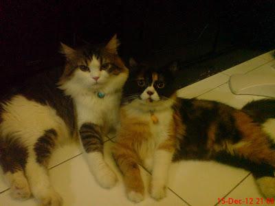 Saudari Tri Astini Suyatno Berbagi Foto Dan Pengalaman