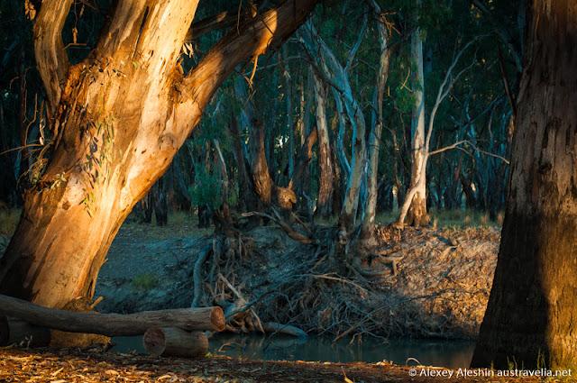 Murrumbidgee riverside, Balranald Caravan Park, NSW