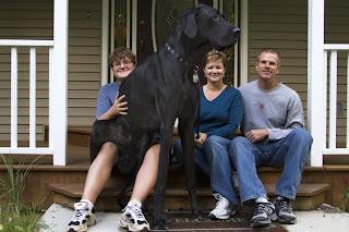 زيوس أطول كلب في العالم