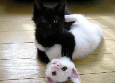 気まずい雰囲気の黒白ネコ
