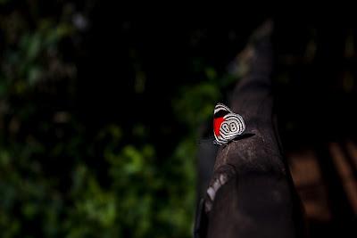 butterfly, mariposa, cataratas, parque nacional, colorida, colour, waterfall, Argentina, Iguazú