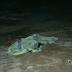Tristeza para a família: Criança cai do caminhão do pai e é esmagada