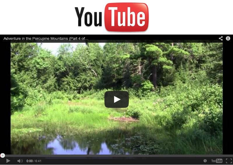 Video Lily Pond