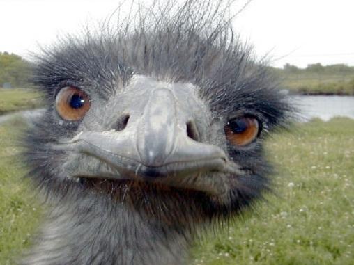 Emu+Photo.jpg