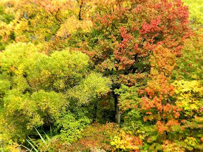 Autumn and Fall Colors Photo 3