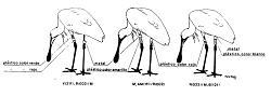 Marcas de Lectura de Anillas