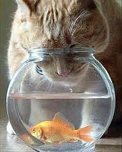 Imagenes Graciosas de Animales,gatos