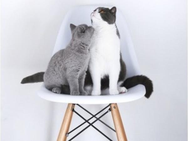 Deco & cats 3